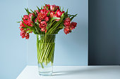 beautiful bouquet red tulips glass vase