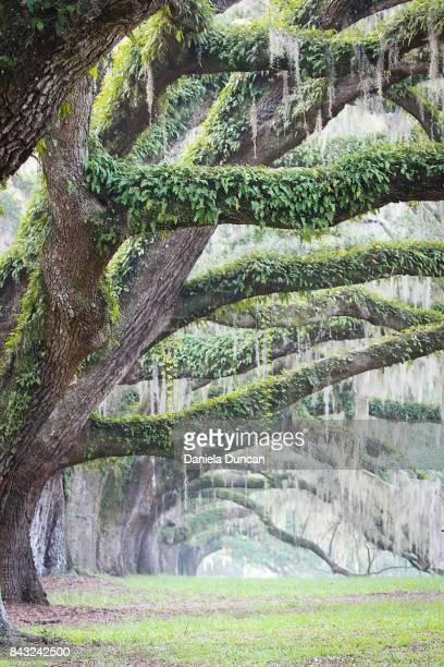 beautiful branches - musgo español fotografías e imágenes de stock