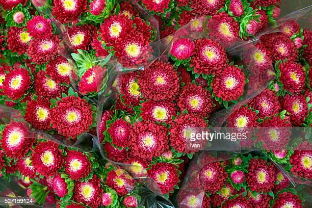 Beautiful bunch of colorful red flowers close-up