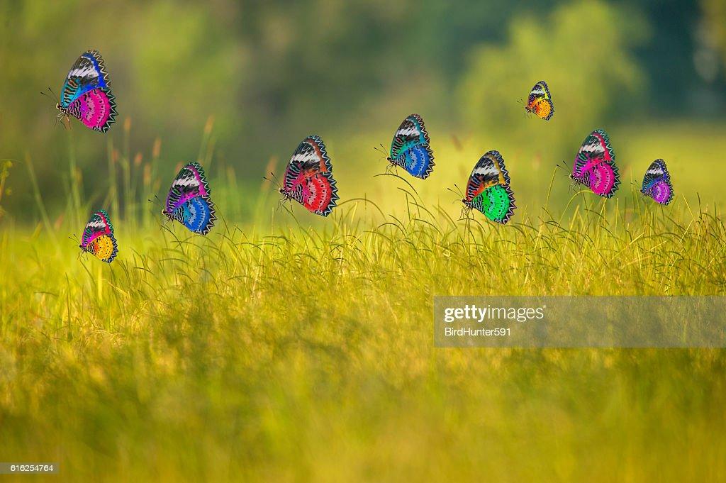 Beautiful butterflies : Stock Photo