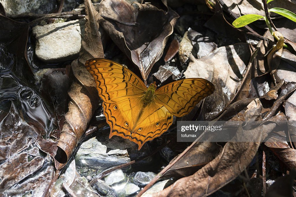 Beautiful butterfly in nature : Stock Photo