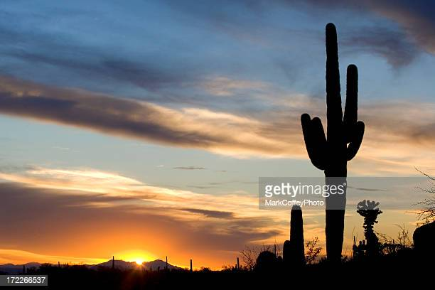beautiful cactus sunset - saguaro cactus stock pictures, royalty-free photos & images