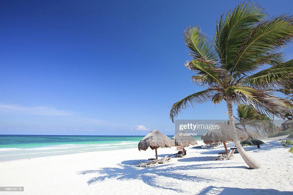 Beautiful Caribbean beach : Stock Photo