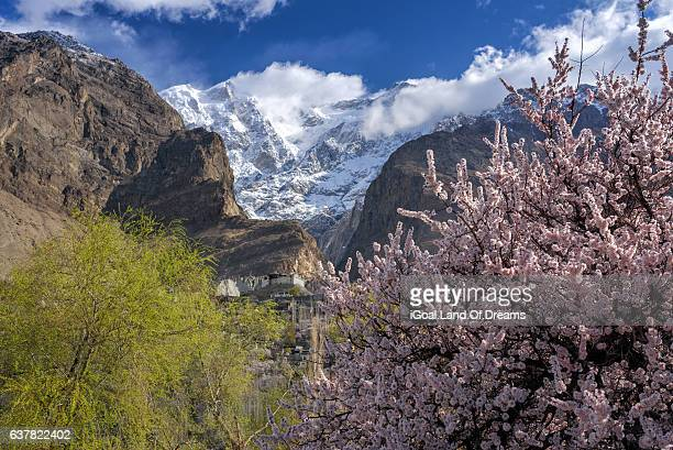 beautiful cherry blossom view in hunza valley ultar peak in the background. north pakistan. - hunza valley stock pictures, royalty-free photos & images