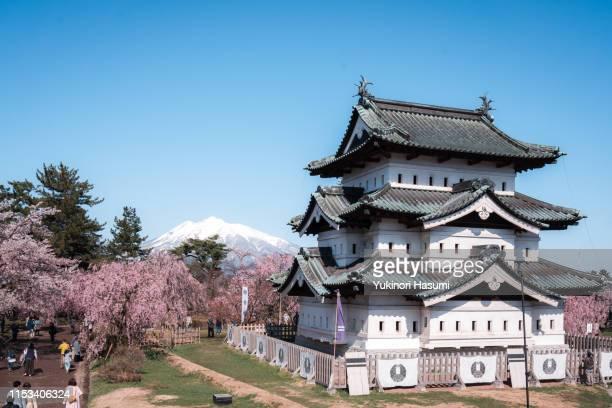 beautiful cherry blossoms in hirosaki park, aomori prefecture - hirosaki castle stock pictures, royalty-free photos & images