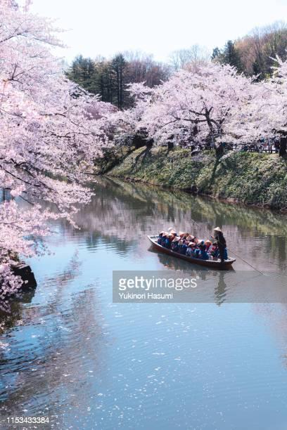 beautiful cherry blossoms in hirosaki park, aomori prefecture - 桜吹雪 ストックフォトと画像