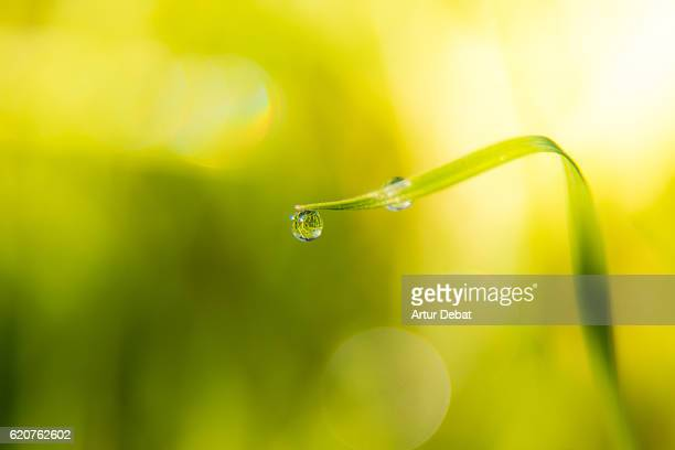 Beautiful close up view of a delicate dew drops in the morning resting over the long grass leafs in autumn day with beautiful background.
