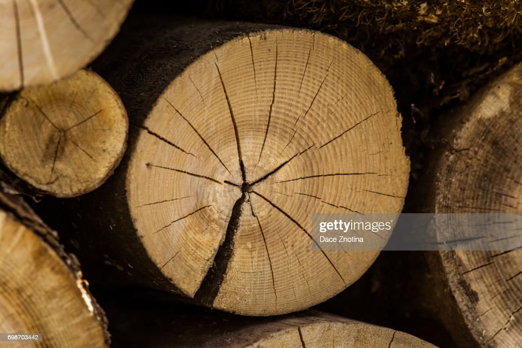 A Beautiful Close Up Of Tree Trunk Wooden Texture Age Rings