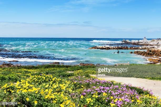 美しい海岸線、野生の花、海へのリードの歩道付近のベティの湾、南アフリカ - オーバーバーグ郡 ストックフォトと画像