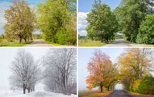 Beautiful collage of 4 seasons, different pictures of an tree avenue, same spot, place. Spring foliage, green fresh bright summer day, foggy morning with yellow autumn leaves, snowstorm in winter. 1160057846