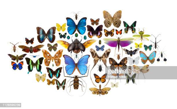 a beautiful collage of colorful tropical insects - butterfly insect stock pictures, royalty-free photos & images