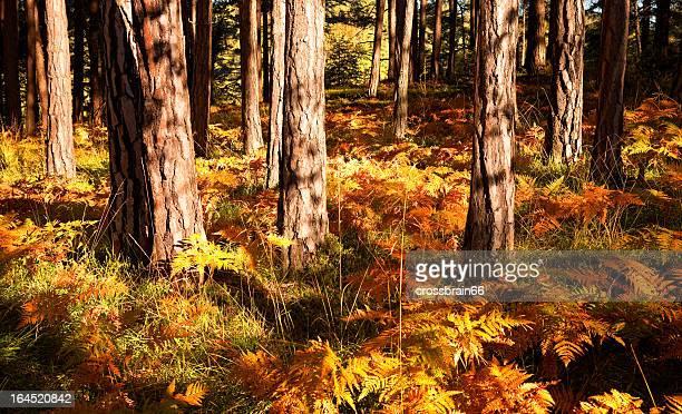 Magnifique Forêt d'automne coloré étage