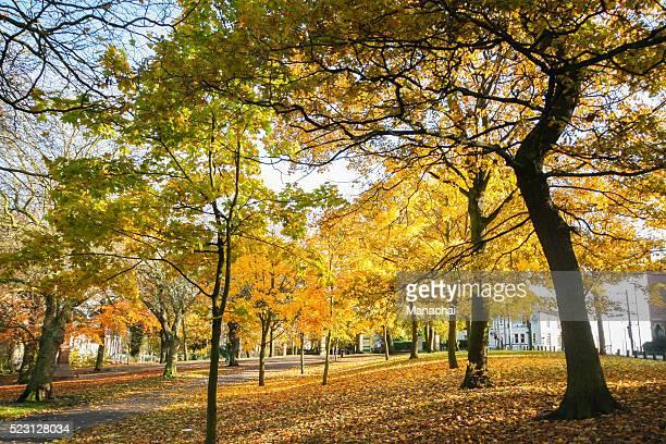 A Beautiful Colorful Autumn Leaves