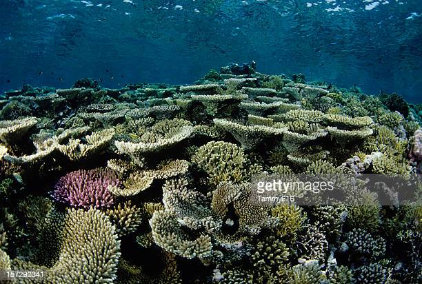 beautiful coloured hard coral reef - great barrier reef stock pictures, royalty-free photos & images