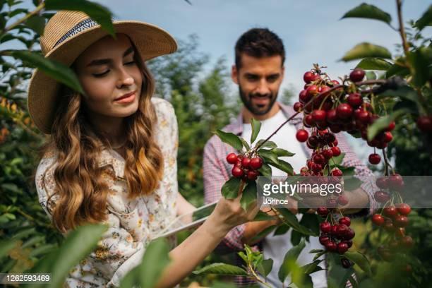 mooi paar dat boomgaard onderzoekt - orchard stockfoto's en -beelden