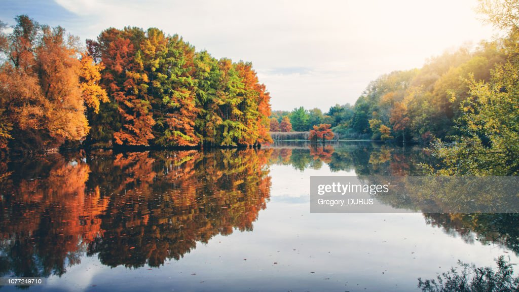 Beautiful cypress tree foliage in autumn season along pond with reflections in water with sunlight of evening sunset in France : Stock Photo