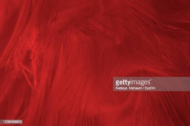 beautiful dark red maroon feather pattern texture background - evil angel photos et images de collection