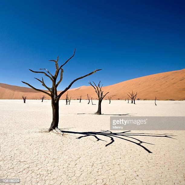 schöne wüste dead vlei - trockenlandschaft stock-fotos und bilder