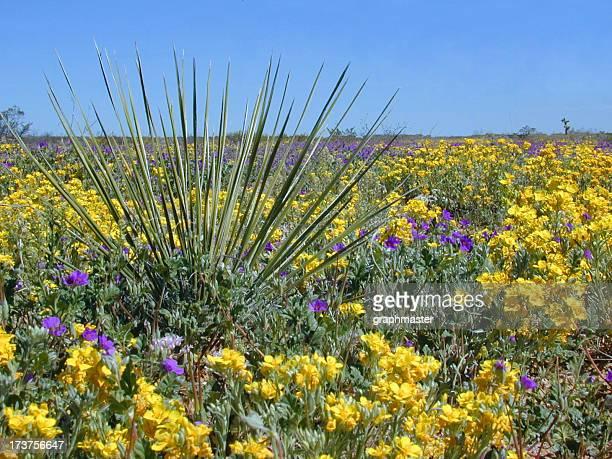 Beautiful desert flowers