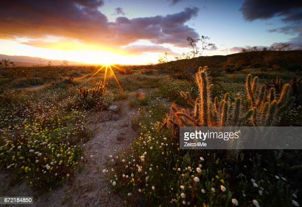 Beautiful desert sunrise