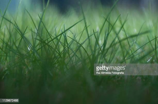 Beautiful detail of wet grass