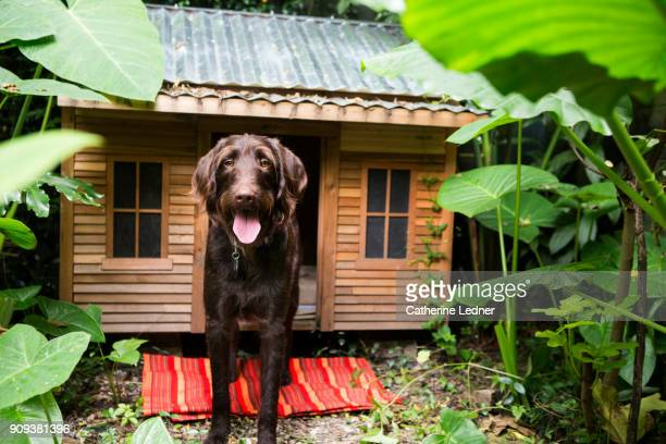 Beautiful dog in front of nice dog house