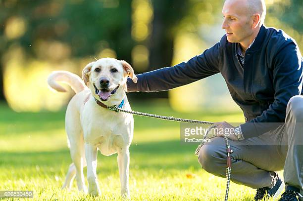 Beautiful dog on a leash held by its owner