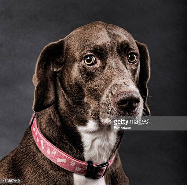 A beautiful dog