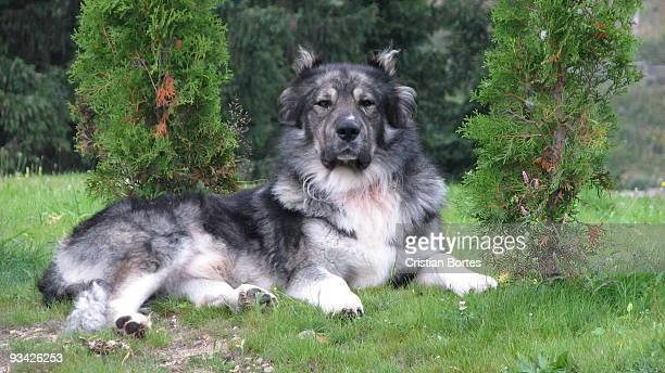 beautiful dog - bortes stock pictures, royalty-free photos & images