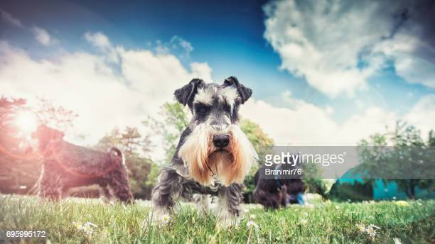 Beautiful dogs-our best friends