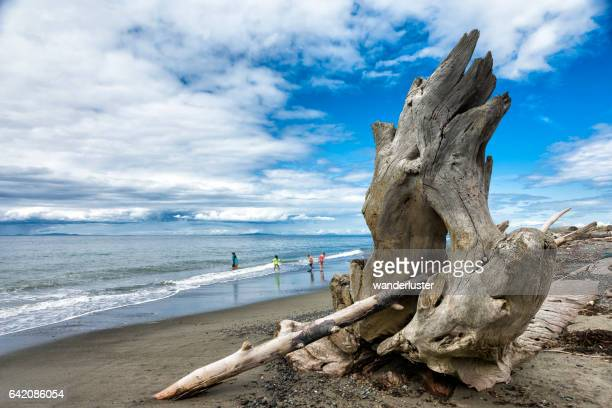 Beautiful Dungeness Spit driftwood