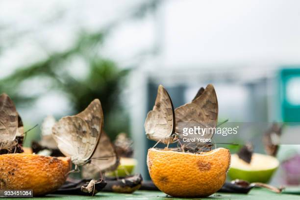 beautiful eating oranges