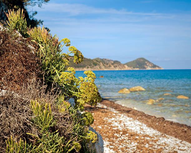 Beautiful Elba island, Italy