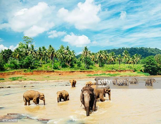 Beautiful elephant orphanage in Sri Lanka