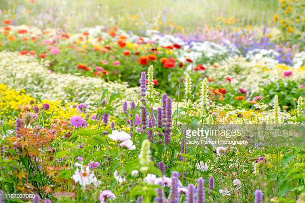 a beautiful english cottage garden with vibrant coloured flowers in the soft summer sunshine - flower head stock pictures, royalty-free photos & images