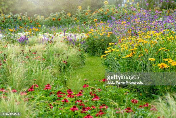 a beautiful english cottage garden with vibrant coloured flowers in the soft summer sunshine - grounds stock pictures, royalty-free photos & images