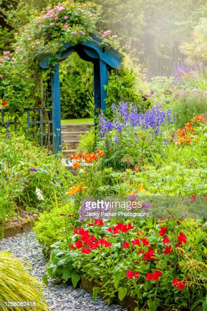 beautiful english cottage, summer garden with blue wooden archway, in soft sunshine - cottage stock pictures, royalty-free photos & images