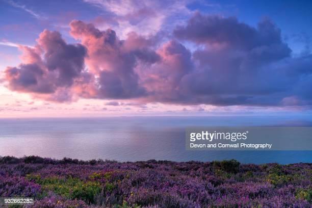 beautiful exmoor sunset - exmoor national park 個照片及圖片檔