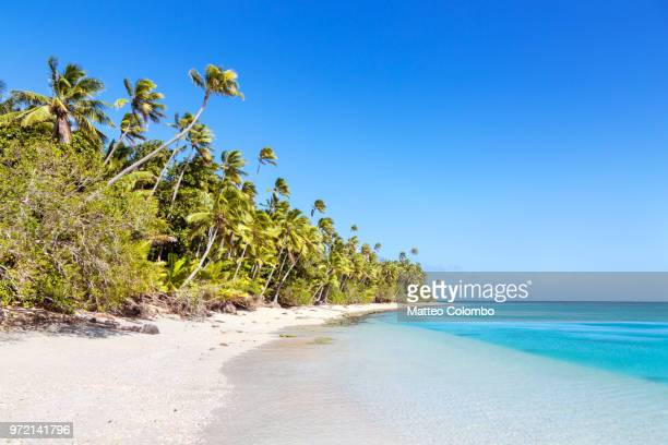beautiful exotic sandy beach with palm trees, fiji - pacific ocean stock pictures, royalty-free photos & images
