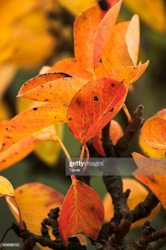 Beautiful fall colors in nature : Stock Photo