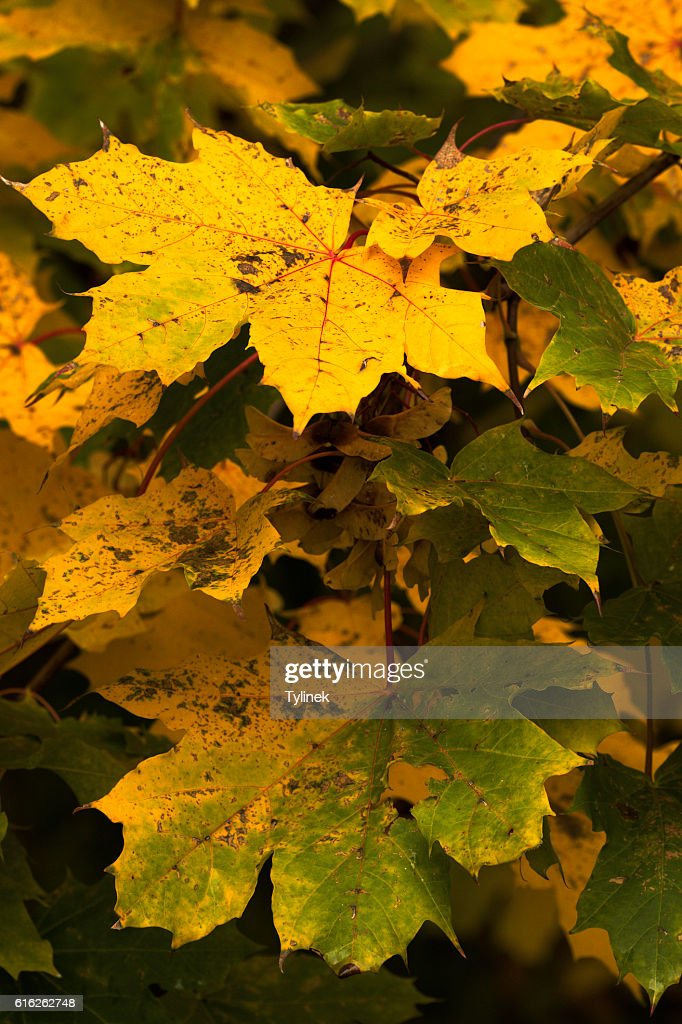 Beautiful fall colors in nature : Stock Photo