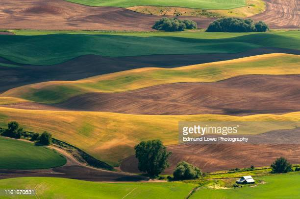 beautiful farmland patterns seen from steptoe butte, washington. - nature stock pictures, royalty-free photos & images