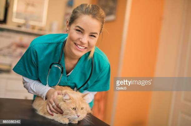 beautiful female veterinarian examining a young maine coon cat. - animal hospital stock pictures, royalty-free photos & images