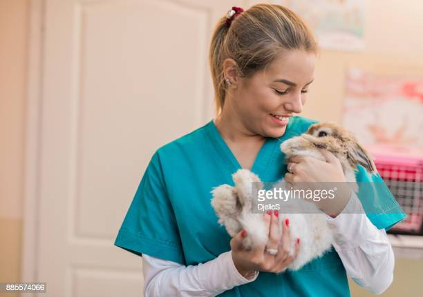 beautiful female veterinarian holding a bunny. - rabbit animal stock pictures, royalty-free photos & images