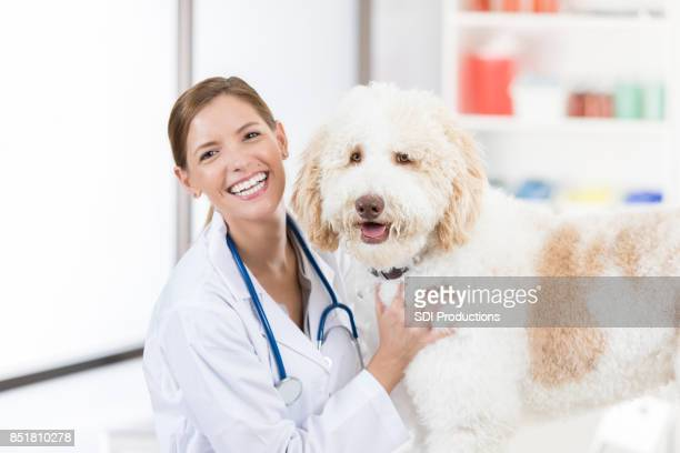beautiful female veterinarian poses for camera with goldendoodle patient - obedience stock pictures, royalty-free photos & images