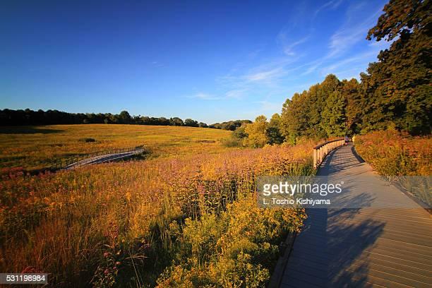 Beautiful field in Lancaster, Pennsylvania