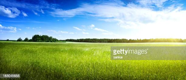 Beautiful field. Panaramic shot.