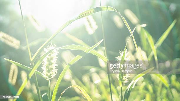 Beautiful field with lens flare