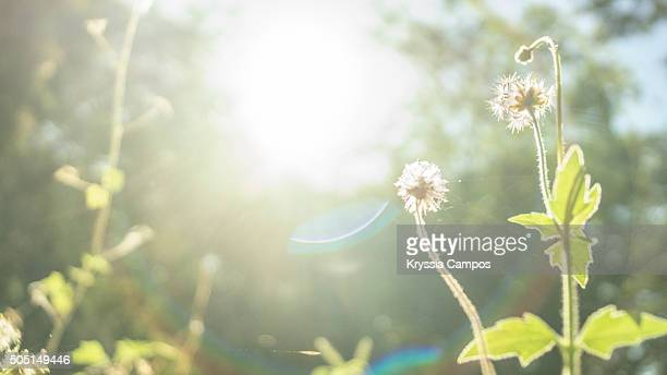 Beautiful field with wildflowers and lens flare
