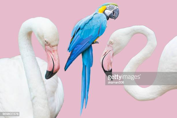 beautiful flamingo bird and parrot bird with pastel background - membre photos et images de collection
